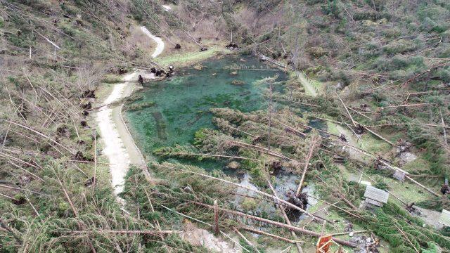 Taibon Agordino (BL): riforestazione dopo la tempesta Vaia