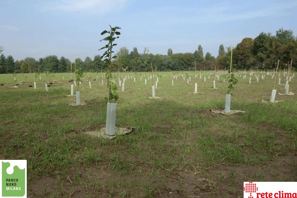 ForestaMI: attività forestali in avvio a Milano
