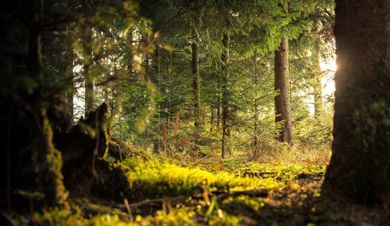 Giornata Internazionale delle Foreste 2020: foreste come risorsa preziosa per l'umanità