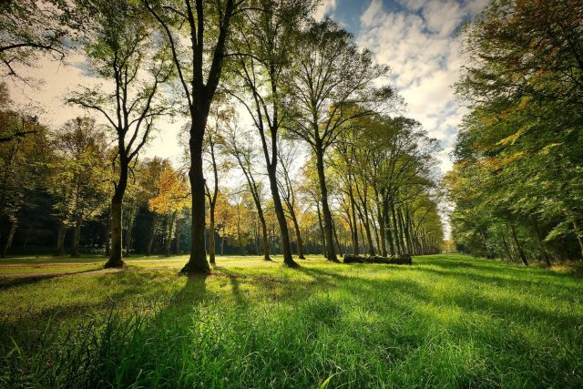 NABI: Nature-Based Innovation for Urban Forest and Rainwater Management