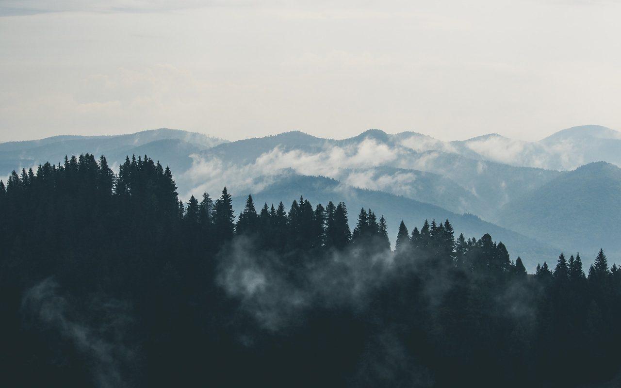 Foreste certificate e gestite in maniera sostenibile: le buone pratiche italiane