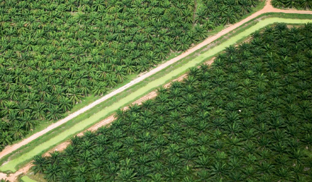 WWF Living Planet Report 2018: meno del 25% della superficie terrestre è ancora in condizioni naturali, crollo della biodiversità