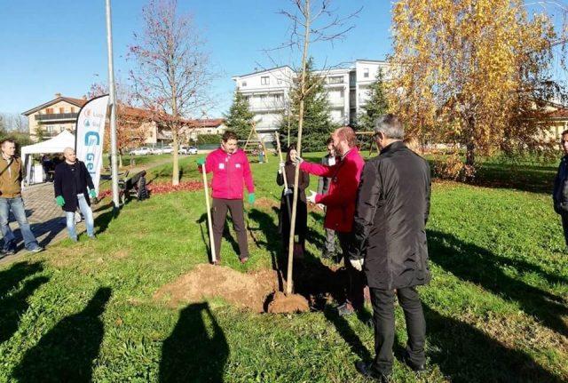 Forestazione urbana: alberi a Carate B.za (MB)