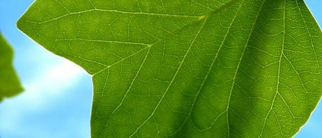 """Assorbimento forestale di CO2: l'albero """"mangia"""" la CO2 (e fa offset del carbonio atmosferico)"""
