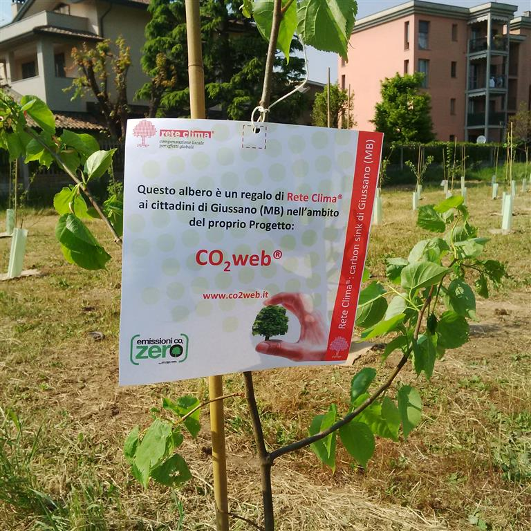 albero_CO2web (Medium)