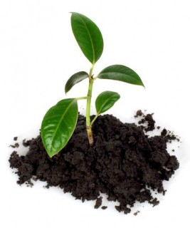 albero_co2_carbon_neutrality