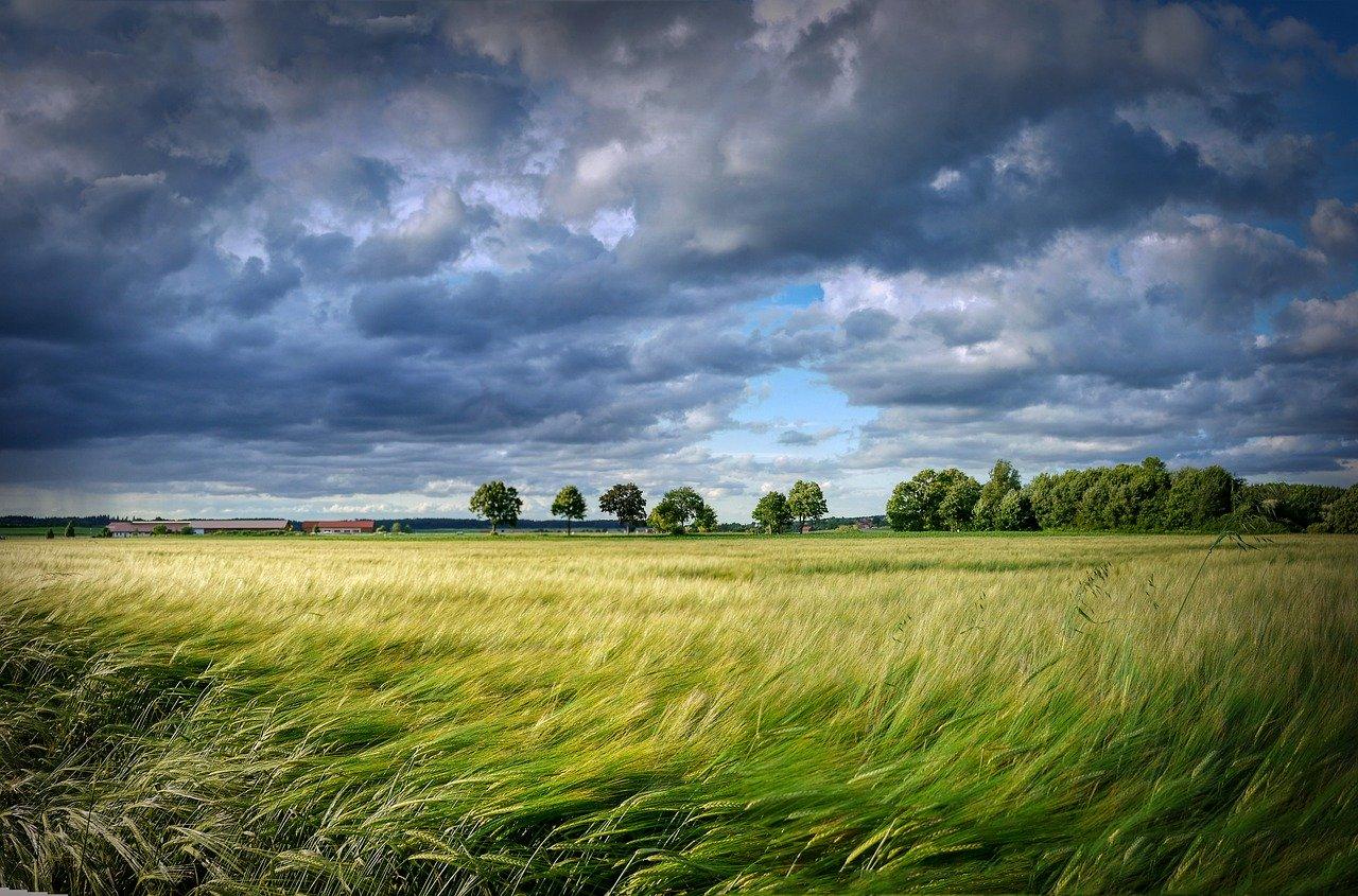 Il Capitale Naturale al tempo del COVID-19, del green new deal e della ripresa economica