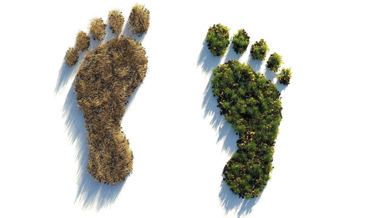 Carbon neutrality (e net-zero emissions)