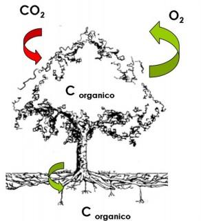 Carbon sink (attività LULUCF, Protocollo di Kyoto e carbon offset)