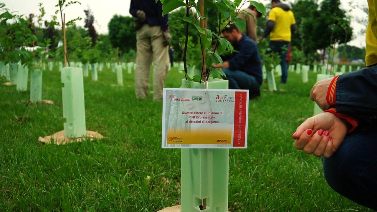 aziende-alberi-CSR