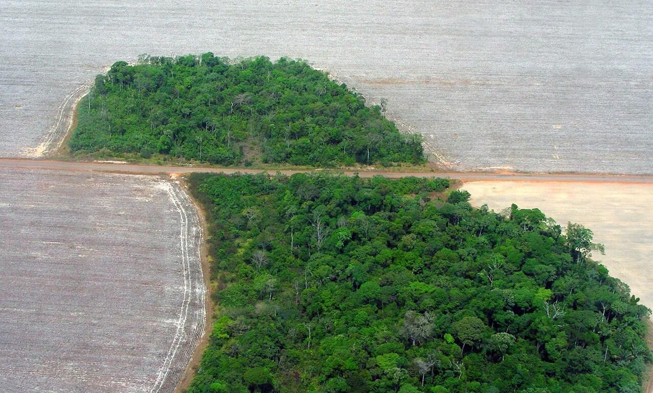 Coronavirus (SARS-CoV2) conseguenza di uno sviluppo non sostenibile e della distruzione degli ecosistemi