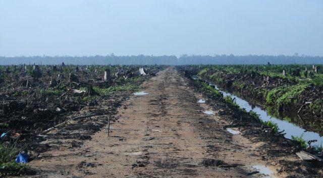 L'Europa importa deforestazione (che siede  alla nostra tavola)