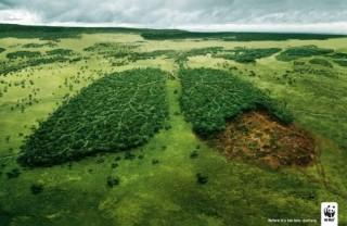 Deforestazione (cambiamenti climatici, biocarburanti, agricoltura)