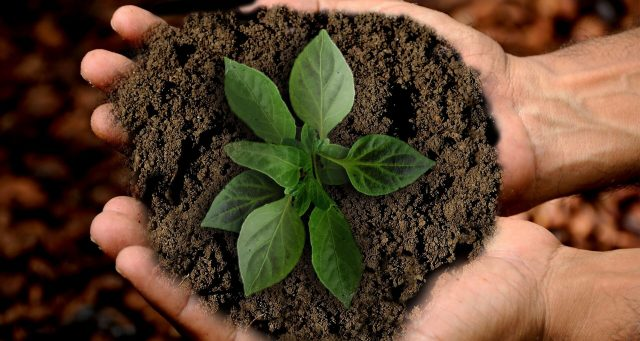 Il tuo Webinar / Web meeting è carbon neutral