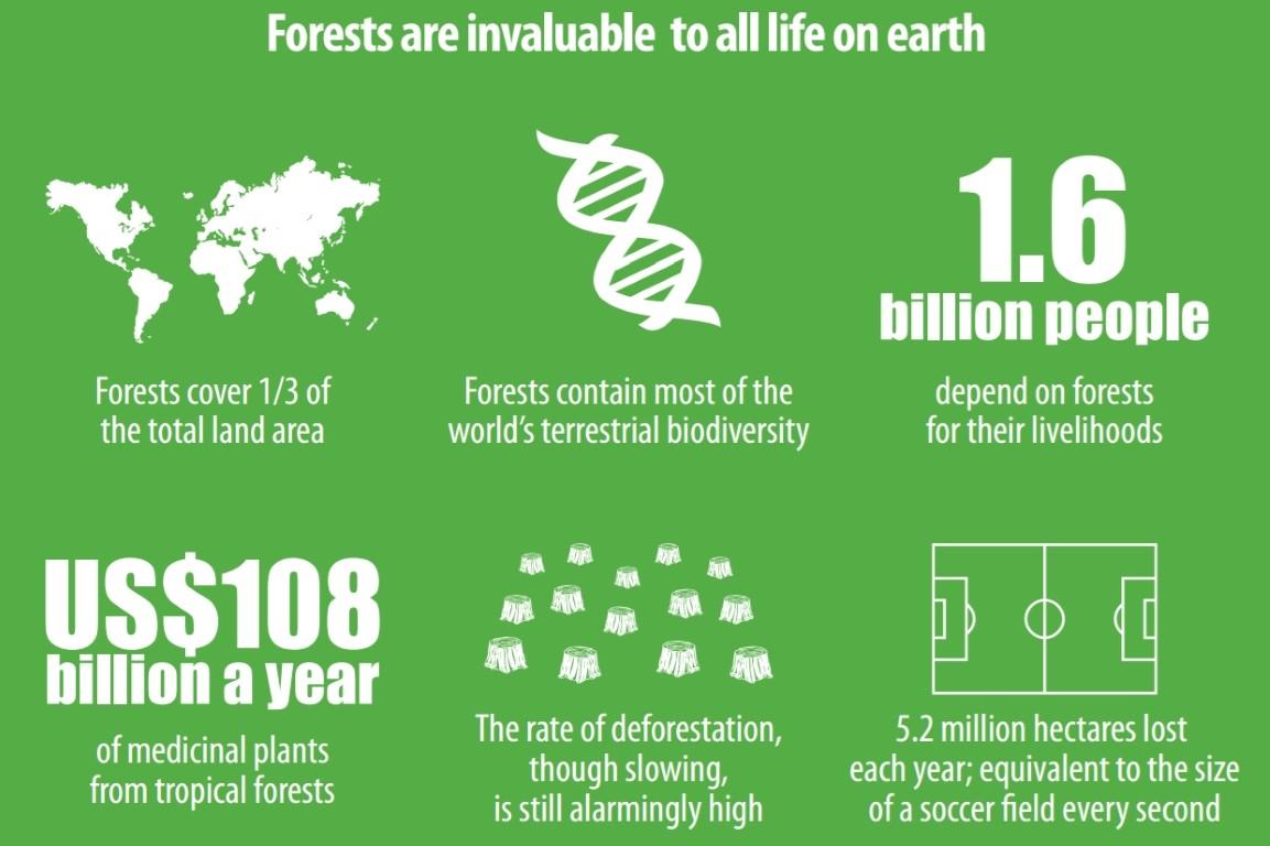 Giornata delle Foreste