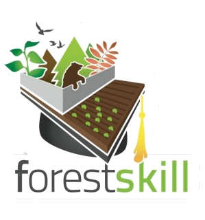 forest-skill_trasp