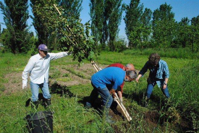 Forestazione compensativa aziendale: BCC Treviglio (BG)