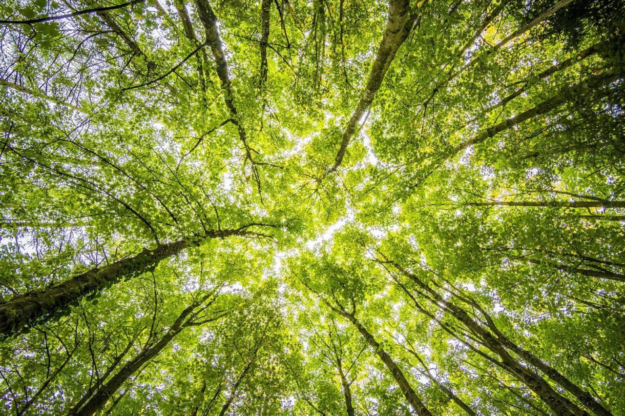 Rapporto tra clima e foreste nei negoziati intermedi delle Nazioni Unite