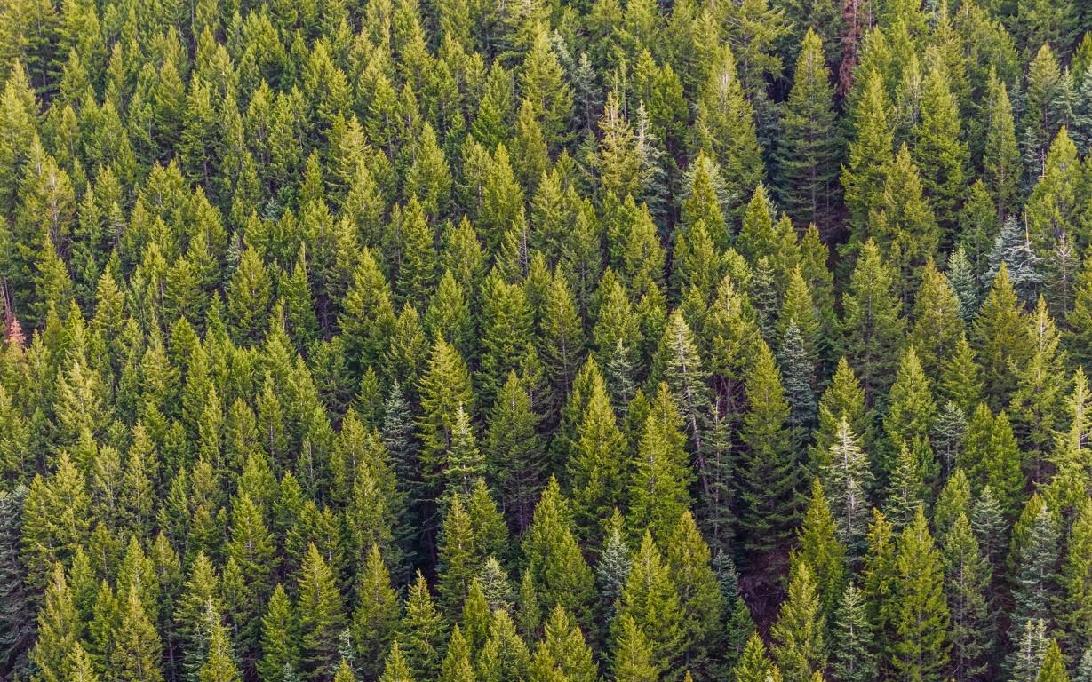 Patuanelli: gestione forestale sostenibile delle foreste italiane e aumento del prelievo legnoso