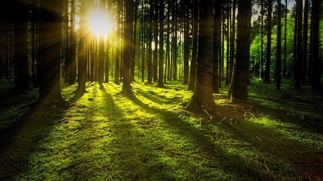 Gestione Forestale Sostenibile in Italia