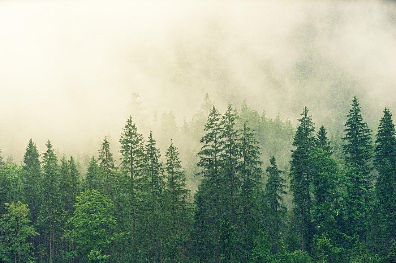 gestione-forestale-sostenibile-crediti-carbonio-forestali-CO2