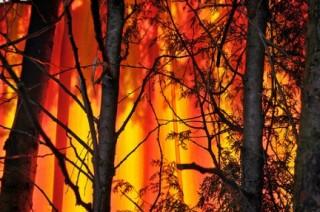 Incendi estivi 2012 in Italia: i dati del Corpo Forestale indicano un +93%