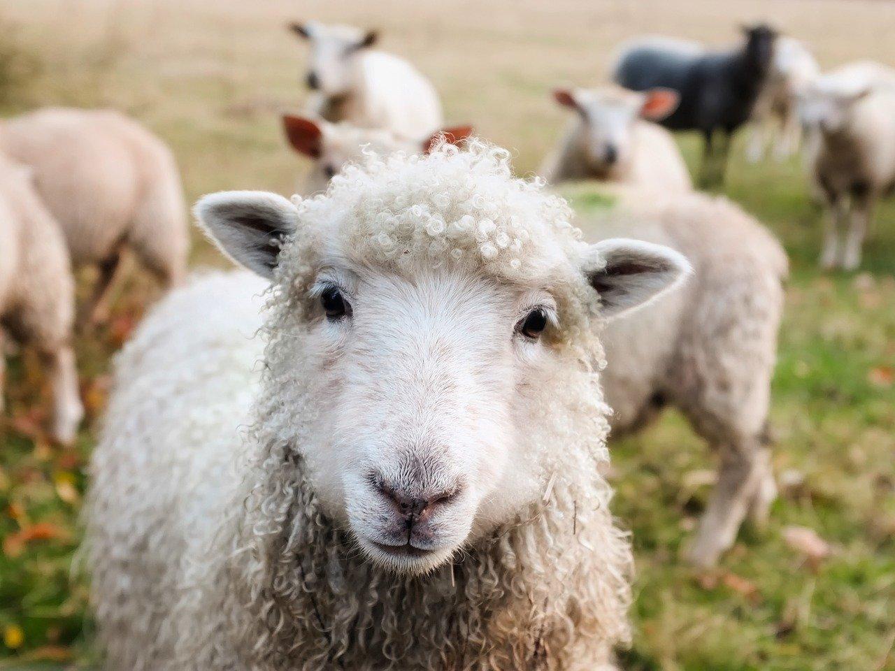 """Rapporto """"Moda e animal welfare"""" di Blumine: la sostenibilità passa anche per il rapporto con gli animali"""