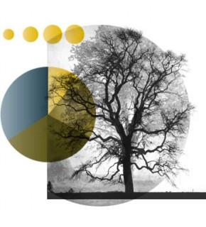 Metodologia per il carbon offset (neutralizzazione nazionale di CO2)