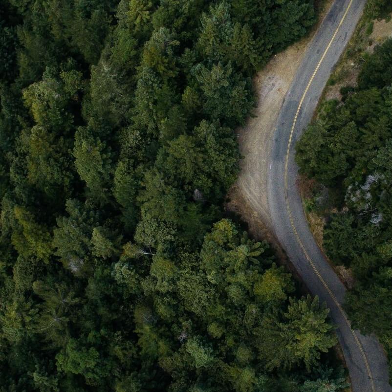 Dalla strada al bosco