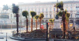 Giusto o sbagliato piantare palme in Piazza Duomo a Milano? Noi stiamo dalla parte degli alberi in città