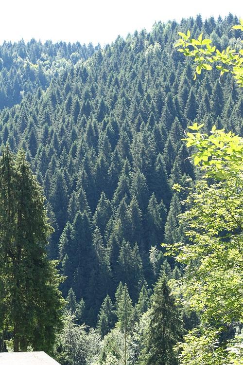 gfs-gestione-forestale-sostenibile