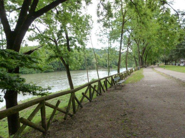 Forestazione urbana: alberi a Torino
