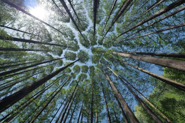 Piantare 60 milioni di alberi in Italia: facciamolo bene, facciamolo insieme! #Unalberoinpiù