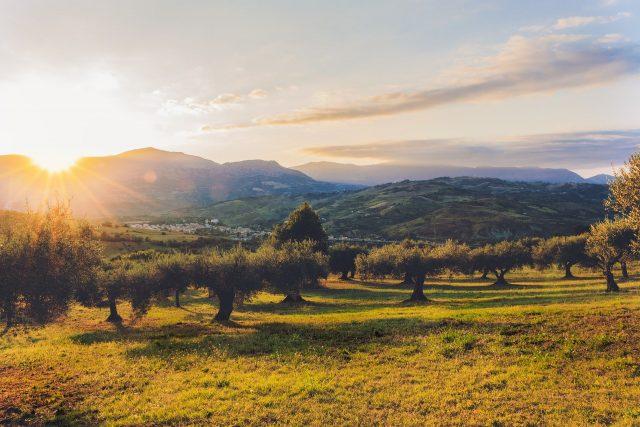Olivicoltura italiana e crediti di sostenibilità