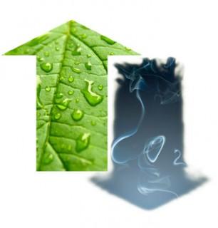 Compensazione CO2 – carbon offset
