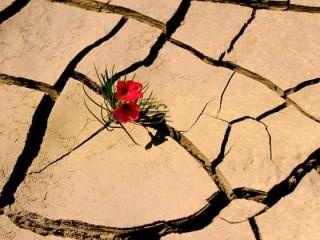 Cambiamento climatico e resilienza (delle specie vegetali)