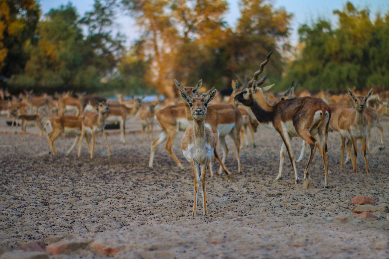 La storia del leone e della gazzella: ecco perché non crediamo al riscaldamento climatico