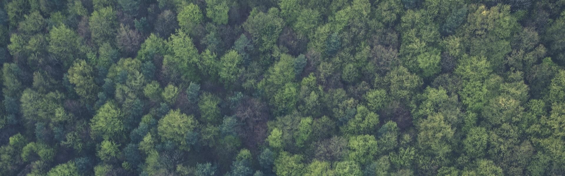 Tutela e miglioramento delle foreste Italiane