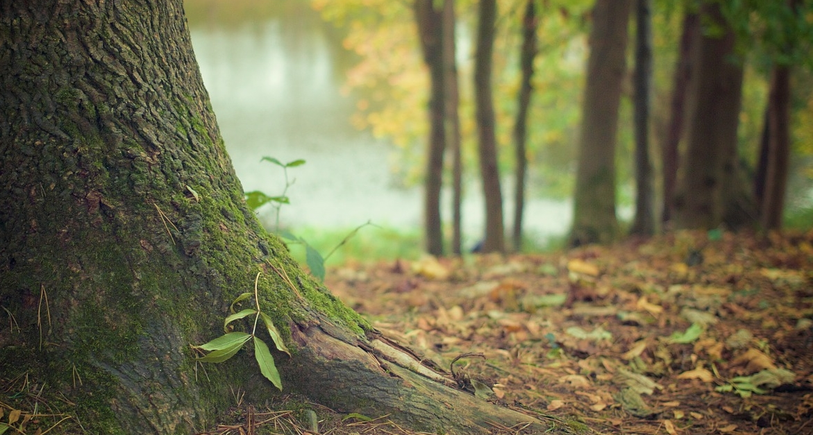 servizi-ecosistemici-ambientali