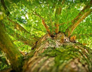 Nasce un #greenteam per la valorizzazione delle foreste: accordo tra Rete Clima e PEFC Italia